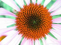 גיאומטריה בפרח